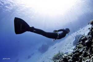 freediving schools
