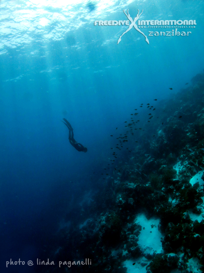 Jonas freediving off Mnemba wall, the bst known diving and snorkelling location around Zanzibar