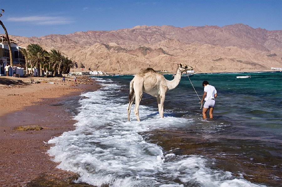While the beach at the main bay is full of little restaurants, as soon as you walk 10 minutes away you will see the real Dahab's life: beduin children playing in the water, a camel getting a bath,  and the snorkeling there is just fantastic.